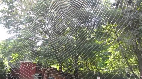 bid web pin worlds spider web on