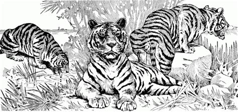 advanced tiger coloring pages adult paisley coloring page coloring page for kids kids