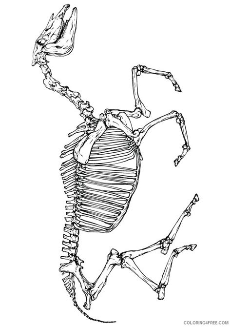 horse skeleton coloring page horse skeleton coloring pages coloring4free