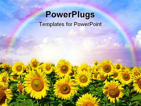 powerpoint template sunflower garden with a rainbow over