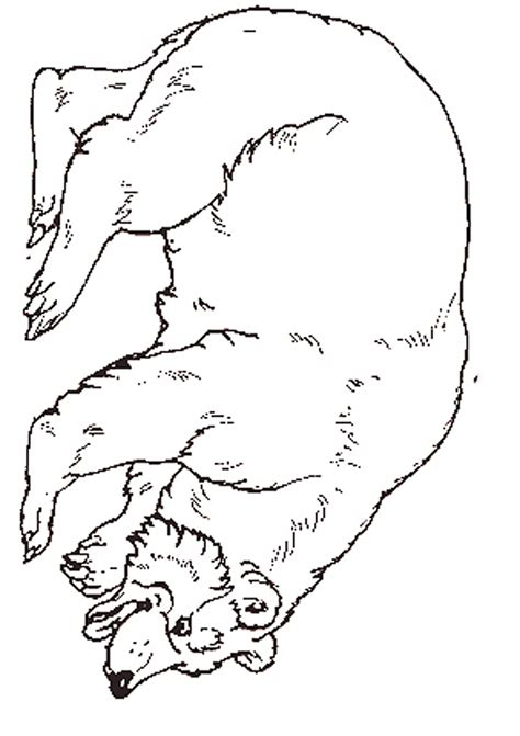 the hat coloring page jan brett best photos of mitten by jan brett coloring page jan