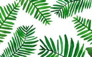 palm leaves wallpaper from www piximitmilch at design pinterest wallpaper prints and doodles