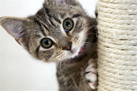 Some Top Tips for the Best Kitten Health Care