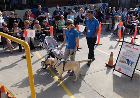 how guide dogs are trained c seda open day guide dogs in zinc moon