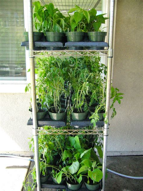 budget u pull it in winter garden sacramento vegetable gardening the wrong 28 images