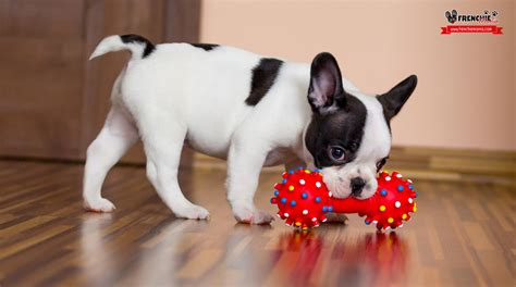 how to tell if your puppy is deaf 5 to take care of deaf dogs