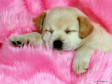 sweet puppy sweet dogs dogs picture