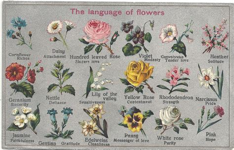 the language of flowers ferrebeekeeper