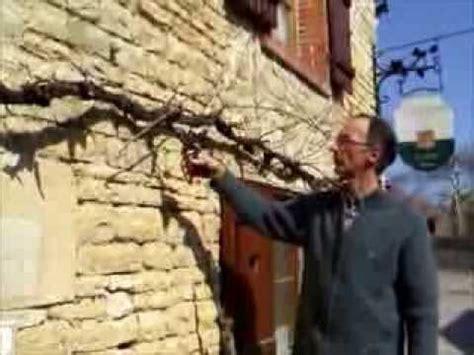 comment tailler une treille de raisin tailler une vigne en treille