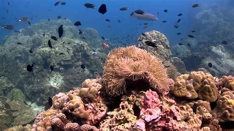 padi dive courses koh tao diving prices dive padi courses