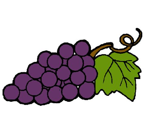 imagenes de uvas a color dibujos de uvas a color imagui