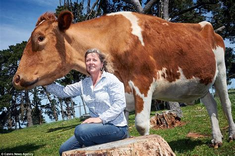 cowhide meaning big moo may be world s largest cow at 14 foot and