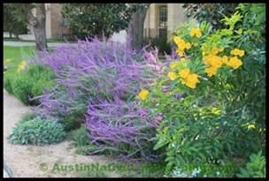 Flowers In Chula Vista - drought resistant landscapes fabulous landscaping ideas