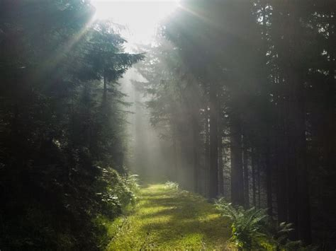 light path through the forest hd wallpapers 183 4k