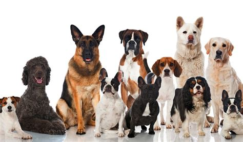 Top Dog Breeds | 30 most popular dog breeds that are famous all over the