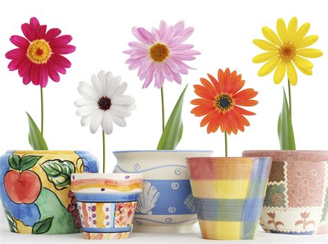 como decorar plantas con macetas c 243 mo decorar macetas 8 pasos