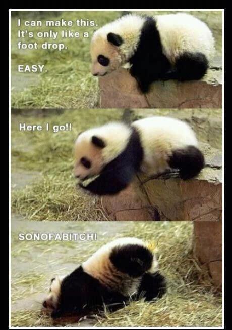Meme Panda - funny panda meme smiles giggles pinterest