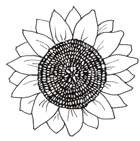 sunflower template printable sunflower coloring pages and printables