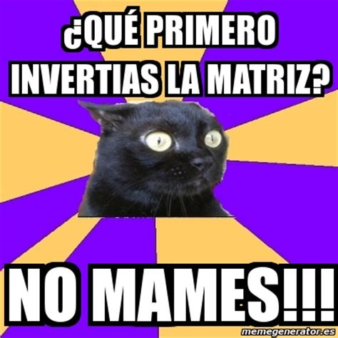 Anxiety Cat Memes - meme anxiety cat 191 qu 233 primero invertias la matriz no