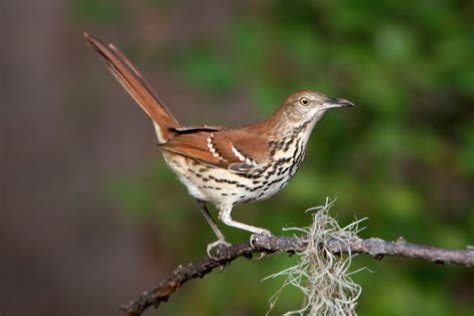 south carolina birds chas mcrae photography