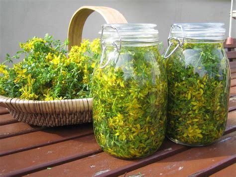 iperico fiore olio iperico oli essenziali i benefici dell olio di