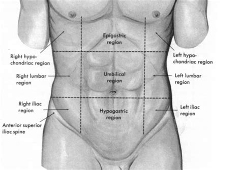 Parts Of The Abdomen Www Uocodac Com