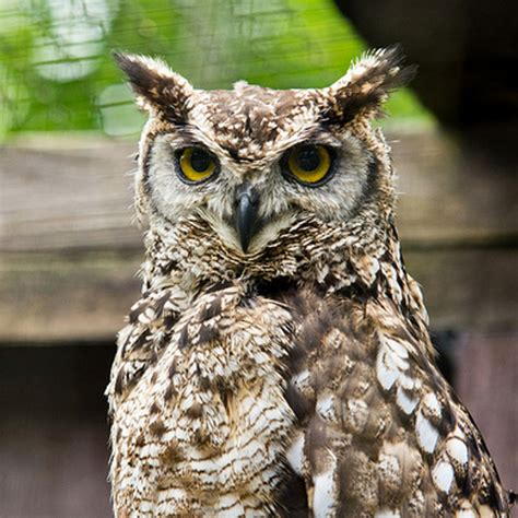 world of owls owls