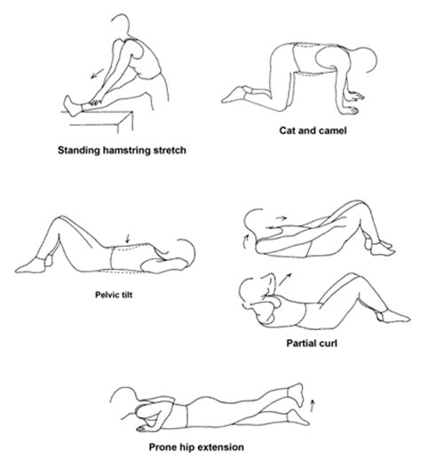 lower back stretches in bed life physical exercise