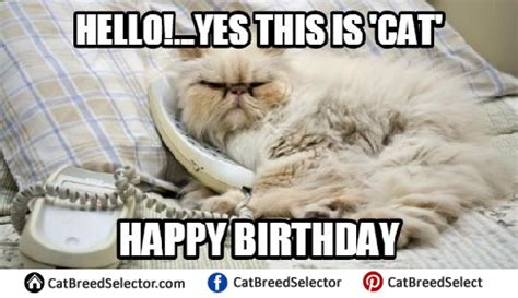 Happy Birthday Cat Memes - happy birthday cat memes cat breed selector