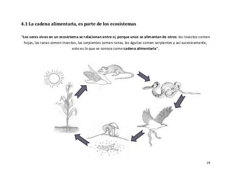 cadenas alimenticias ejemplos con dibujos dibujo para colorear cadena alimenticia imagui
