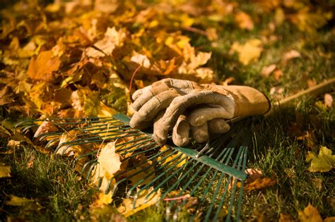autumn garden how to get the absolute most out of your fall garden