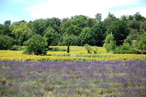 pflanzen der provence pilgerreisen provence 187 lavendelreise