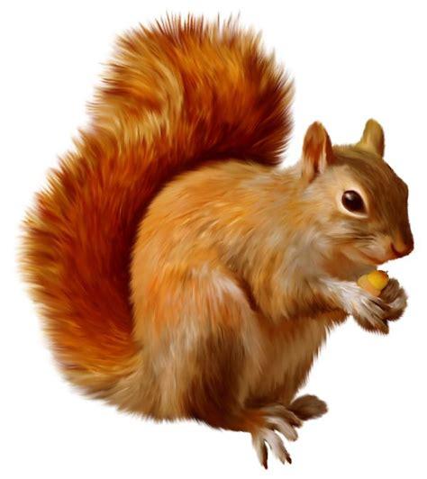 squirrel clip squirrel clipart gif zvieratk 225 squirrel