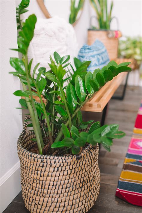 7 common houseplants air purifying indoor plants
