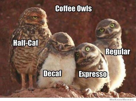 Meme Owl - coffee owls weknowmemes