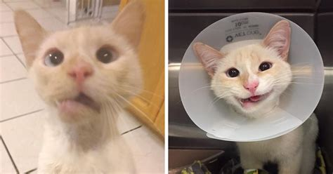 Smiling Cat rescue cat turns broken jaw into gorgeous smile bored panda