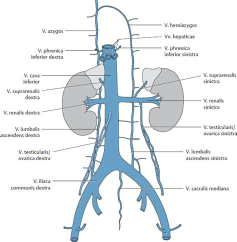 vena iliaca interna overview of neurovascular structures basicmedical key