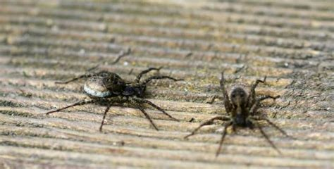 how to get rid of spiders in your house how to get rid of spiders 15 top ways to keep the spiders away