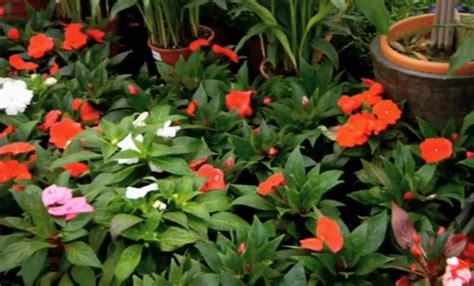 piante da ombra per giardino i fiori per un giardino all ombra coloratissimo leitv