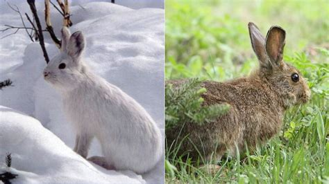 animals that change color spirituality science photoperiodism september equinox