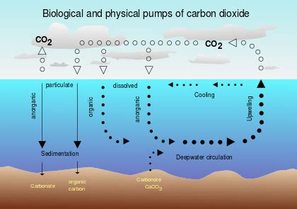 what is a carbon sink carbon sink