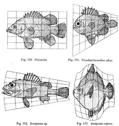pattern theory david mumford david mumford work on the theory of shape