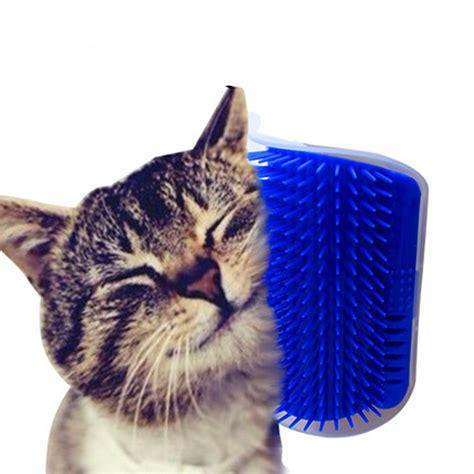 self grooming cat self grooming brush with catnip animal translate
