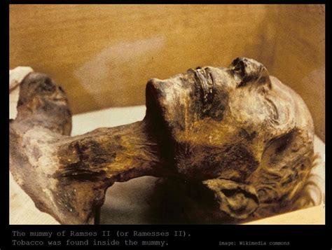 Would You Still If Mummy Used It by The Ancient Egyptians Were Black