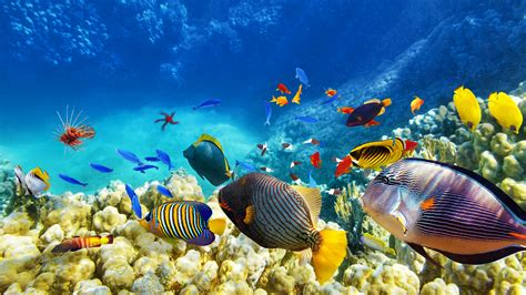 wallpaper colorful fish and interactive water colorful fishes wallpaper wallpaper studio 10 tens of