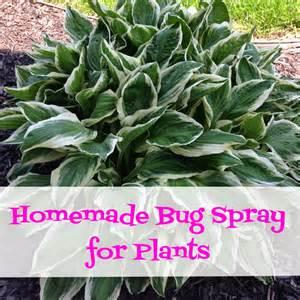 homemade bug spray for plants coupon crazy girl