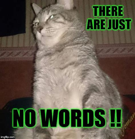 Meme Words - cat stare imgflip