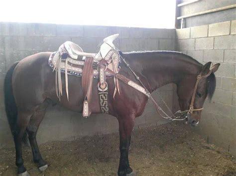 Caballos Cuarto De Milla Venta Mercadolibre Argentina | pin mercado libre mexico caballos venta on pinterest