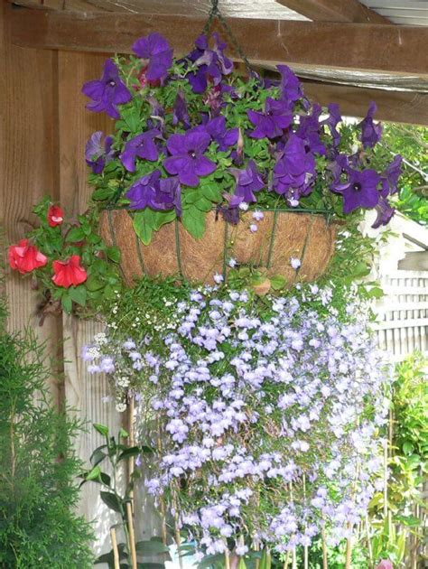 draping plants 70 hanging flower planter ideas photos and top 10