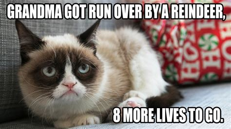 Grumpy Cat Christmas Memes - mashable grumpy cat tardar sauce watercooler amorversal
